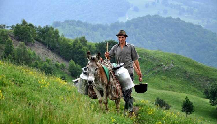 #RomaniaAutentica – la stâna lui Gheorghe, ciobanul din Golcin