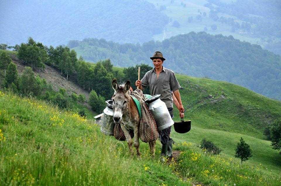 gheorghe-ciobanul-golcin