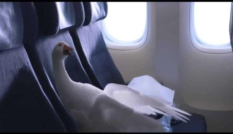O nouă campanie Air New Zealand: Și păsările zboară cu avionul