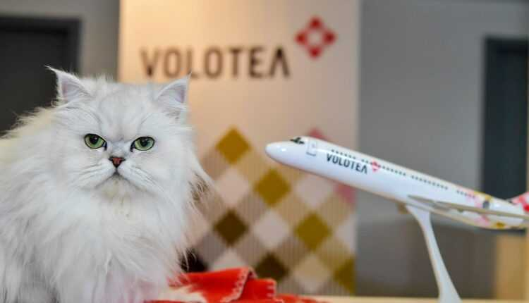 Volotea oferă un an de zboruri gratuite pentru pisica Lily